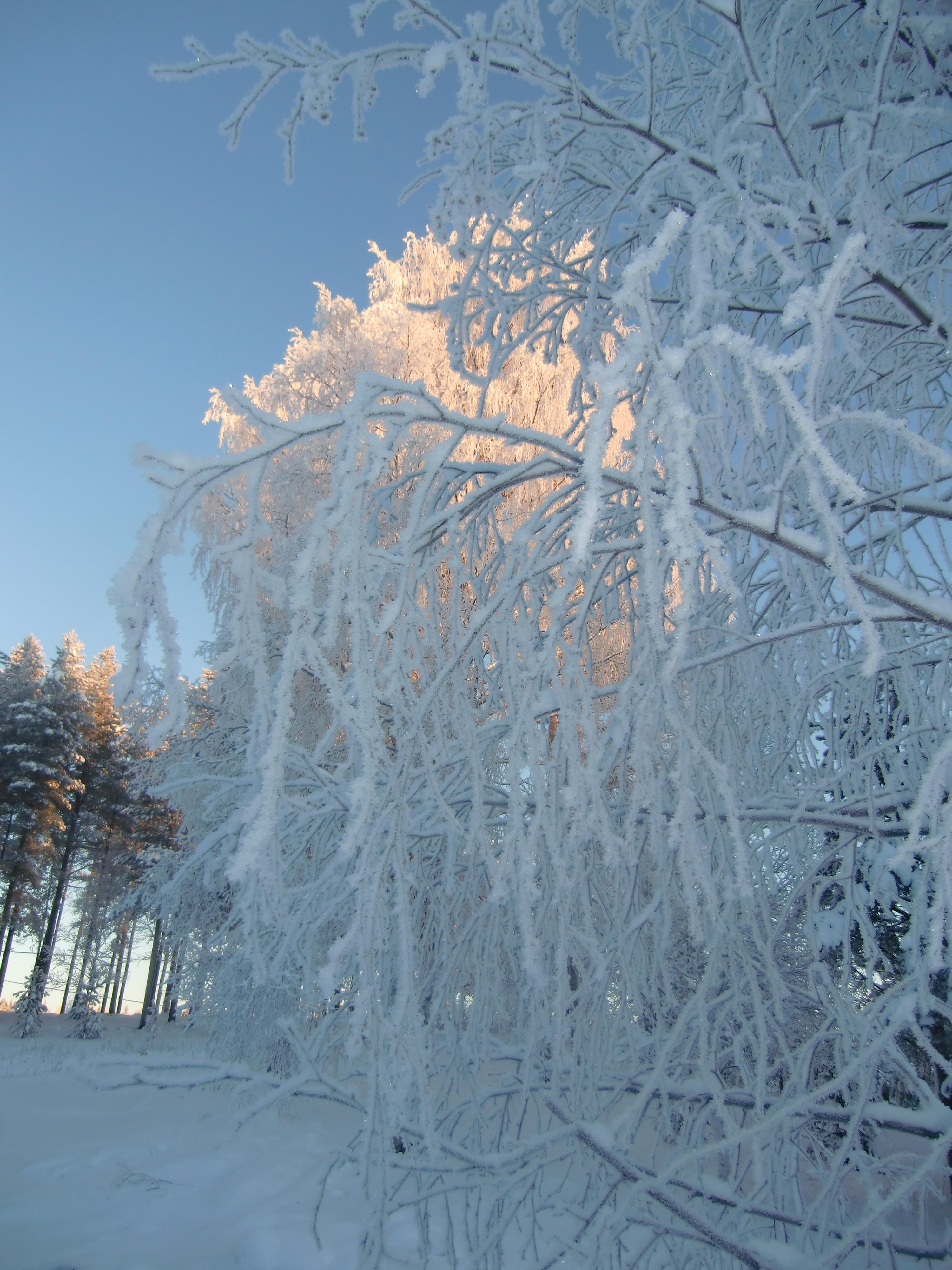 Ingers vinterbild 1