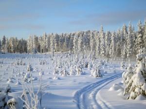 Skoterspår i vinterland