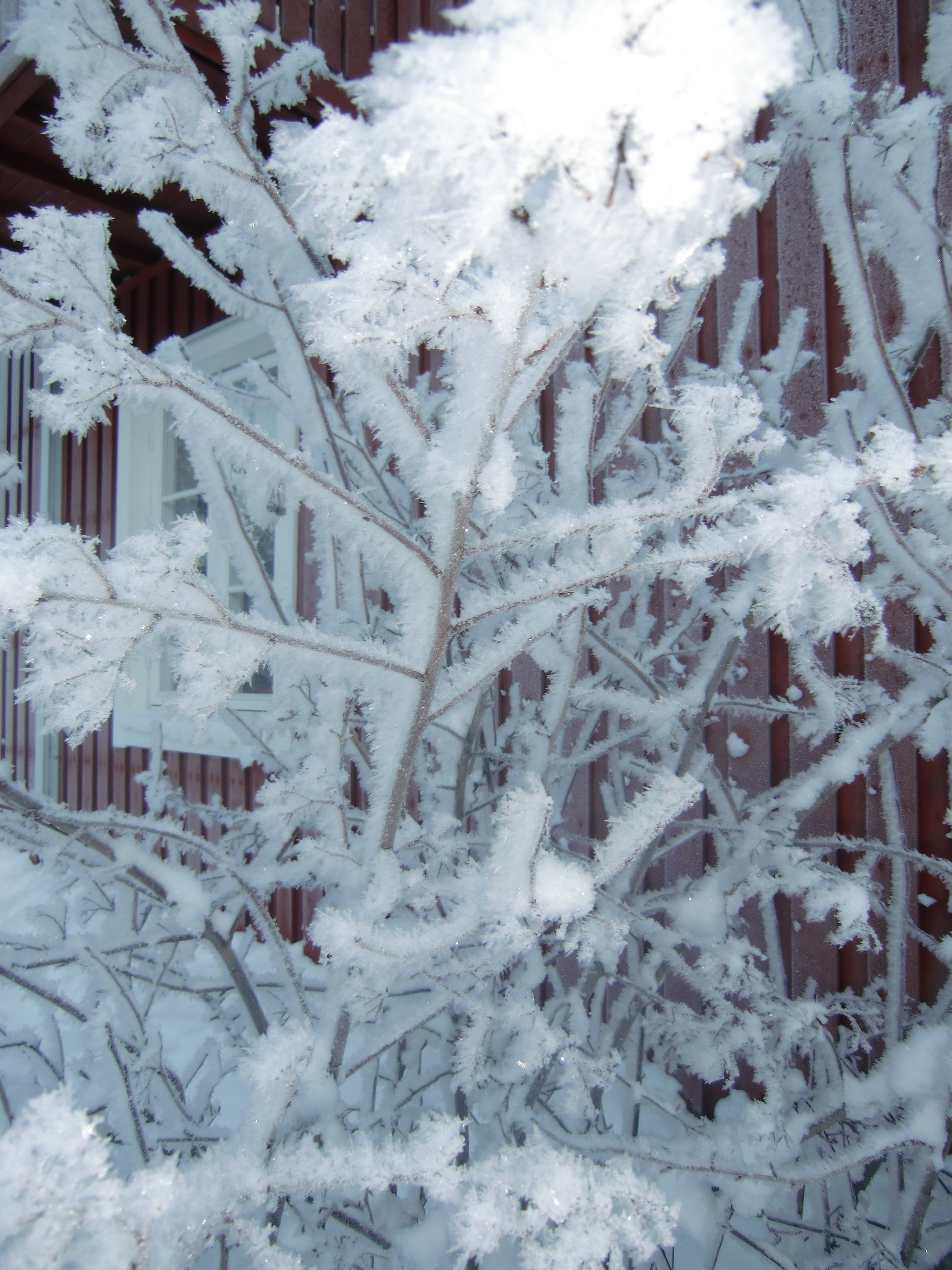ingers vinterbild 4